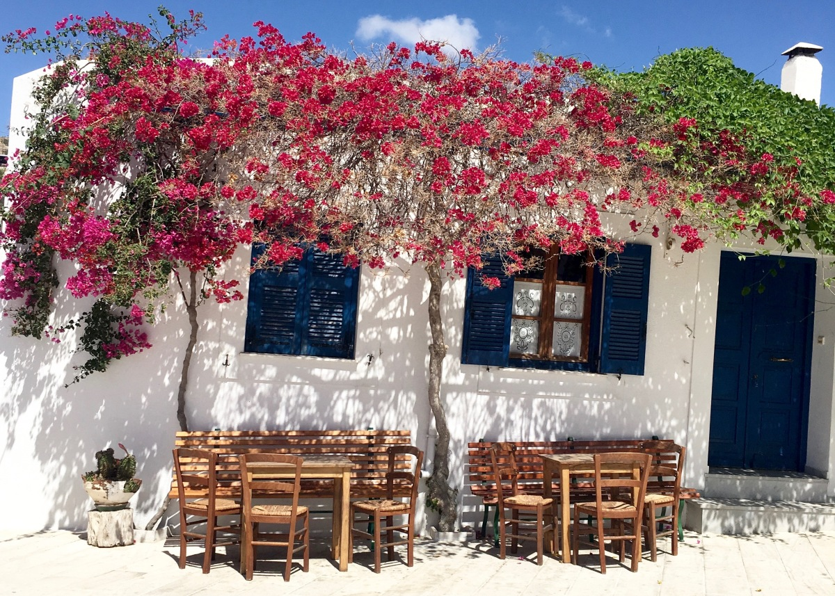 Postcards from Paros - Under the Bougainvillea Tree